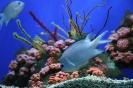 аквариумы подвальных помещений
