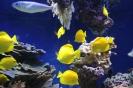 Монако, океанариум
