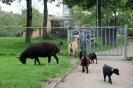 мини зоопарк Нидерланды