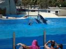 С дельфинами можно поплавать, цена 30-40 евро