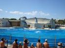Дельфинарий в аквапарке
