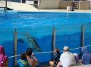 Через прозрачные витрины можно рассмотреть дельфинов
