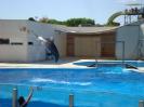 Дельфины выпрыгивают из воды на несколько метров вверх